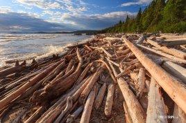 Driftwood-at-shore-of-Lake-Superior